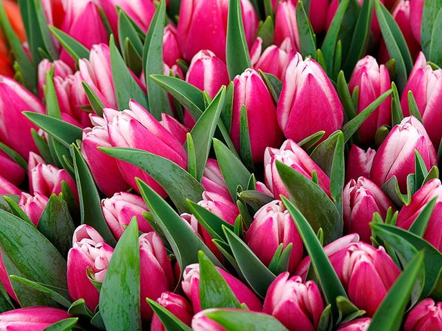 Cover Image of Petals